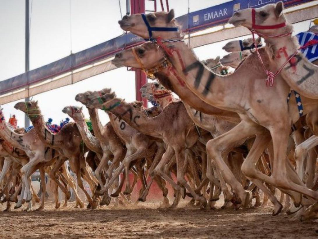 camel racing march2014-e1446471203531