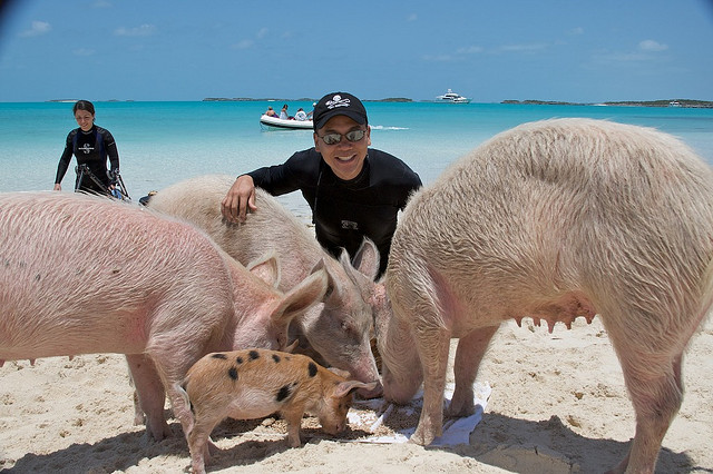 pigs-beach-bahamas-exuma-swimming-pigs-24